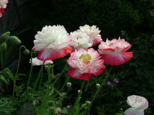 improving home value flowers
