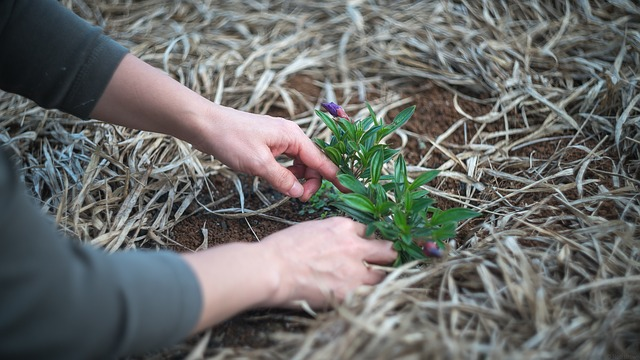 gardening-1645815_640